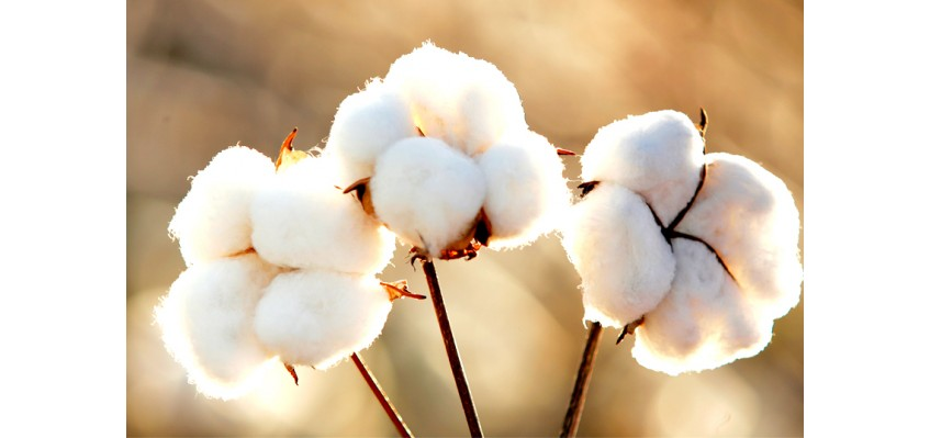 Organik Tekstil Nedir?